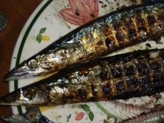 秋刀魚は庭で